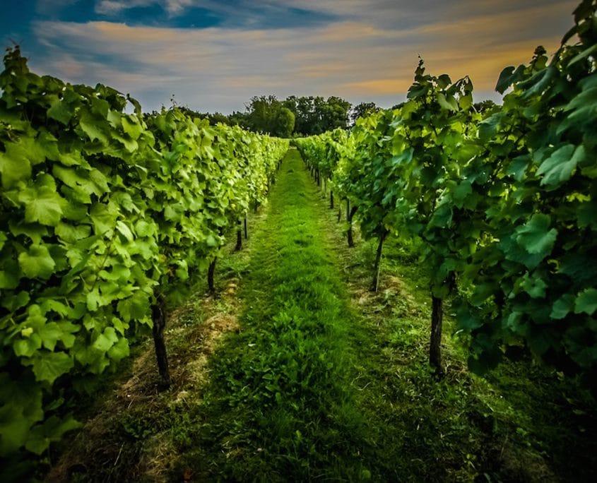greyfriars vineyard, major pr